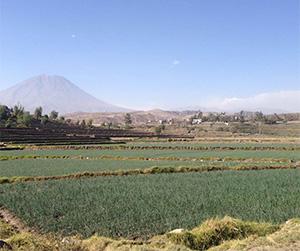 Yumina Arequipa