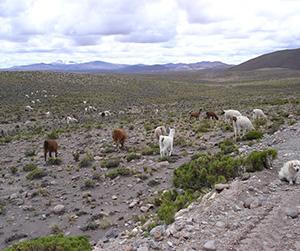 Pampa Cañahuas